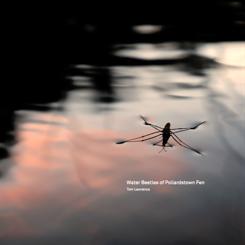 Tom Lawrence - Water Beetles of Pollardstown Fen [CD]